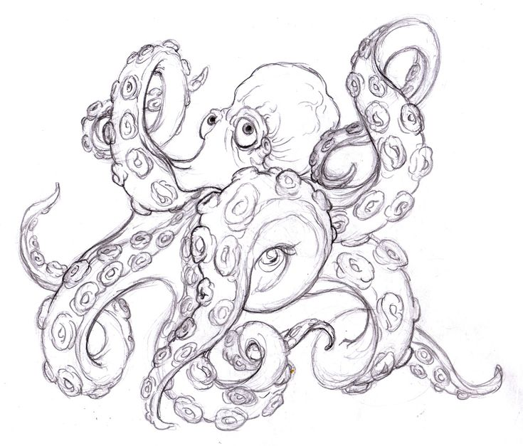 octopus tattoo drawing photo 2