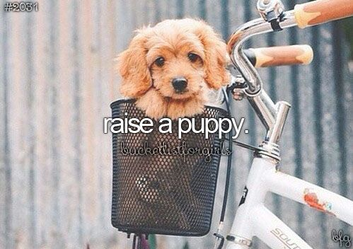Once I have graduated from University, I hope to adopt and raise a puppy. I have always wanted to be able to call a dog mine and get the opportunity to teach it tricks and learn to behave. I also think this would be the first step in learning if I am ready to become a parent!