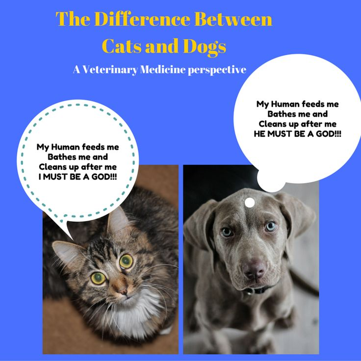 the differences between having dogs and cats for pets How are rabbits different from cats & dogs rabbits are prey animals outdoor rabbits face many dangers from predators they could be attacked by cats (both domestic and wild), dogs, wolves, and birds of prey such as hawks and falcons.