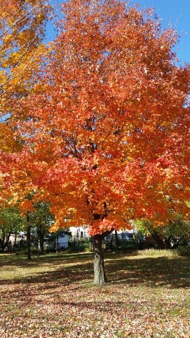 Fall! Welcome!