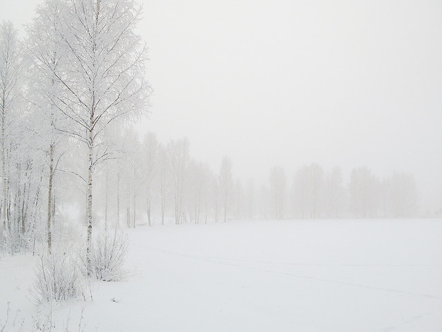 Snowy snowy snow by Mark van Gils