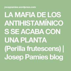 LA MAFIA DE LOS ANTIHISTAMÍNICOS SE ACABA CON UNA PLANTA (Perilla frutescens) | Josep Pamies blog