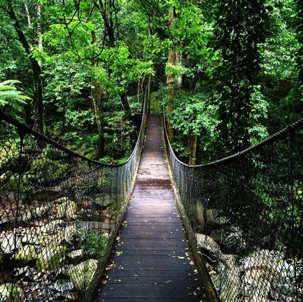 Tip-toe across a wooden bridge suspended over a rainforest. | 23 Magical Things You Didn't Know You Could Do In NSW
