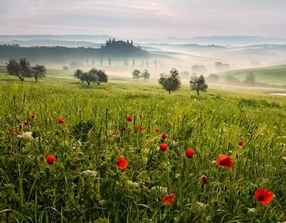 "Check out new work on my @Behance portfolio: ""Magic Tuscany "" http://on.be.net/1OXjDAZ"