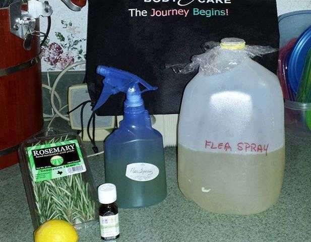 Flea Spray This one is my favorite, it smells so good!  Make a pleasant smelling and effective flea repellent - Boil water, add thinly sliced lemons and sprigs of rosemary and let sit overnight. The next morning add a few drops of geranium essential oil, pour into a spray bottle, spritz on soft furniture, bedding and even the dog to repel fleas. Treat the dog's bed as well.  ❥ Share to save on your timeline ❥ or Tag yourself to save it to your photo album  ¸.•´*¨`*•✿•❥• ❥ Follow me…