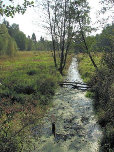 The Forest Brook (Bialowieza)