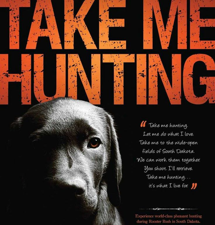 Why pick up your own duck or pheasant, have your best friend do it for you. #hunt