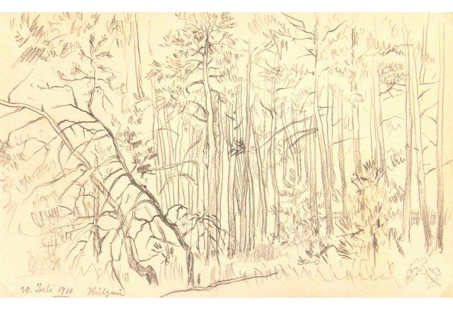 Forest Drawing, 1910