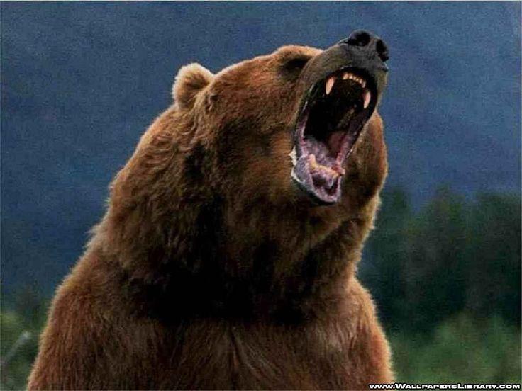 från nattens dröm, då jagad av tre grizzlybjörnar och tre vargar i en korridor