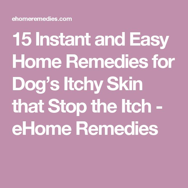 15 Instant and Easy Home Remedies for Dog's Itchy Skin that Stop the Itch - eHome Remedies