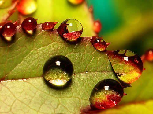 ......: Amazing Photography, Autumn Leaves, Waterdrop, Dew Drop, Raindrop, Macros Photography, Dewdrop, Water Droplets, Rain Drop