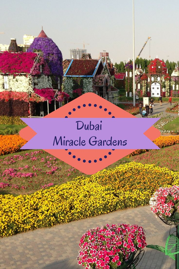 1000 Images About MIRACLE GARDEN DUBAI On