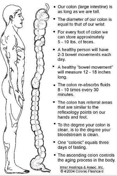 #Colon Facts. #health #wellness                                                                                                                                                     More