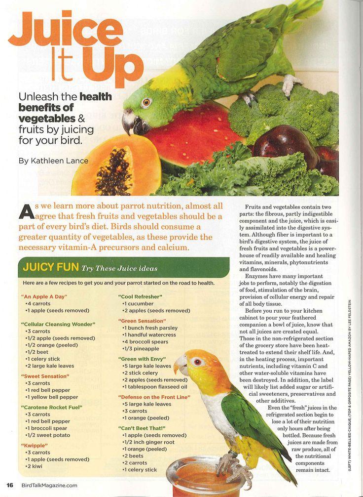 Sun Conure Food List