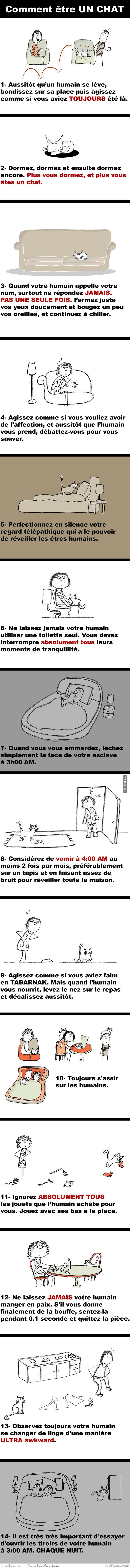 14 Façons d'être un chat:: Somehow it's more droll in French