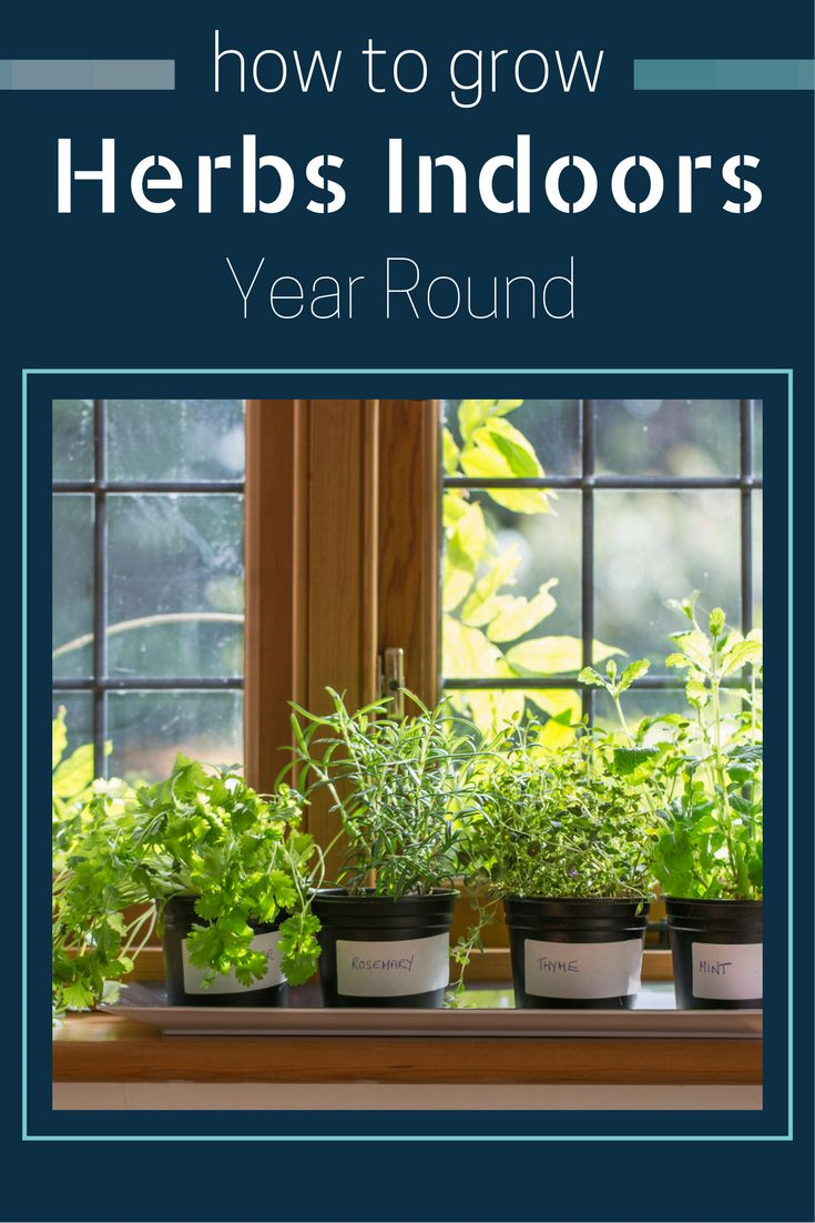 Find out how to grow herbs indoors year round!