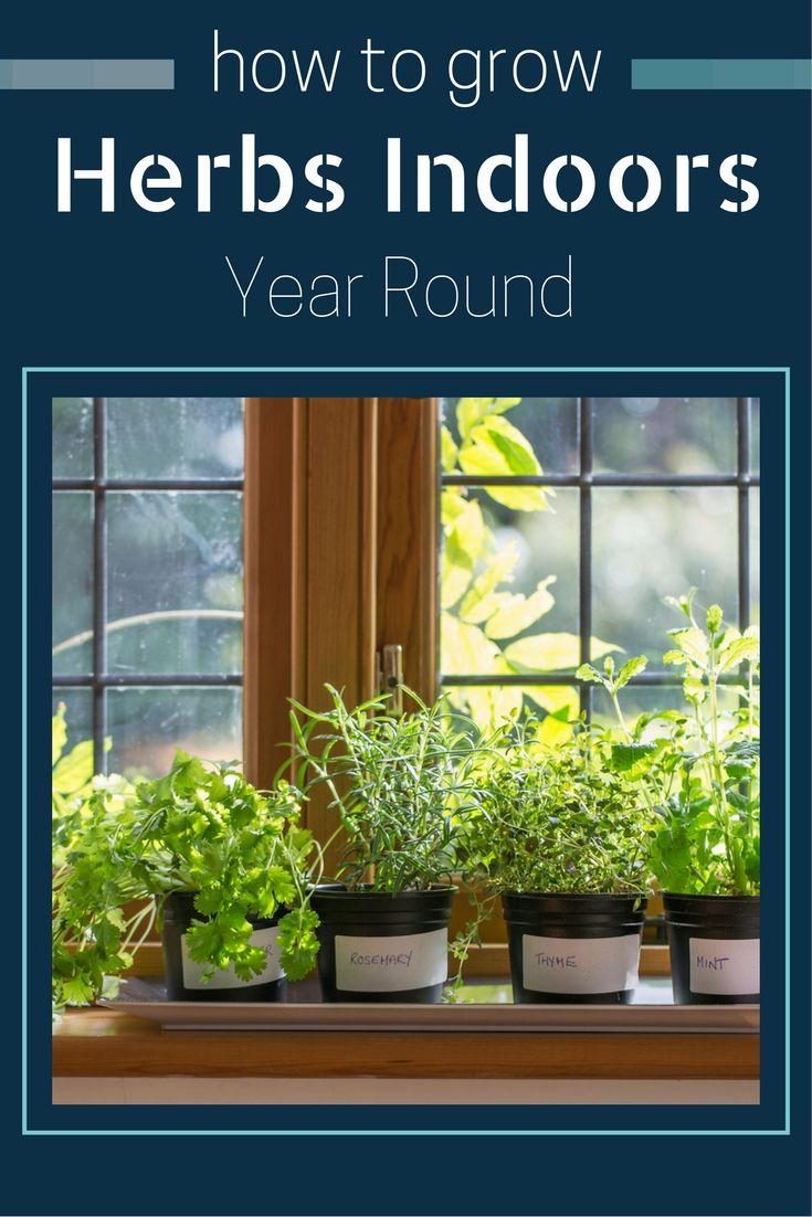 Roses In Garden: Best 20+ Year Round Flowers Ideas On Pinterest