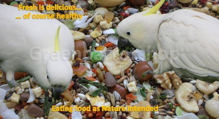 healthy and tasty for happy cockatoos