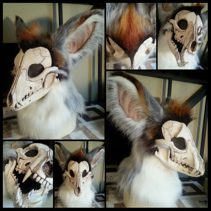 Skull Canine - Phoenix - by therealurubabe