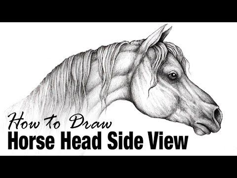 How to Draw a Horse Head, Side View - Arabian Horse
