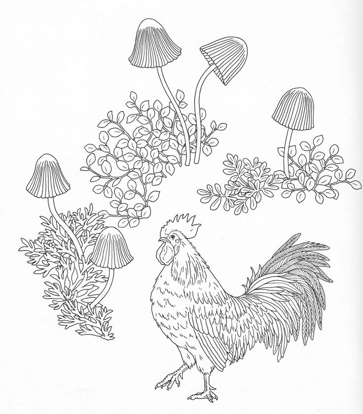Harmony Of Nature Adult Coloring Book Pg 19 Color Pages