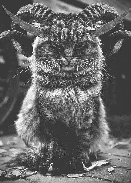 Hail cat Satan