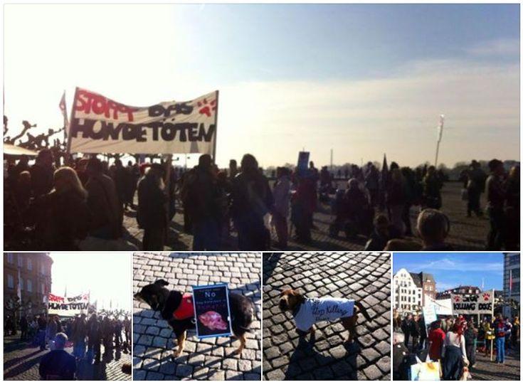 Mahnwache gegen den Hundemord in Rumänien @Düsseldorf #Tierschutz #Hundemord #Mahnwache #veggiemall #Tierrechte #Burgplatz #Düsseldorf