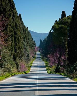 Bolgheri, Leghorn, Tuscany.  Wow :) (20 minutes by car from our Farm Holidays)