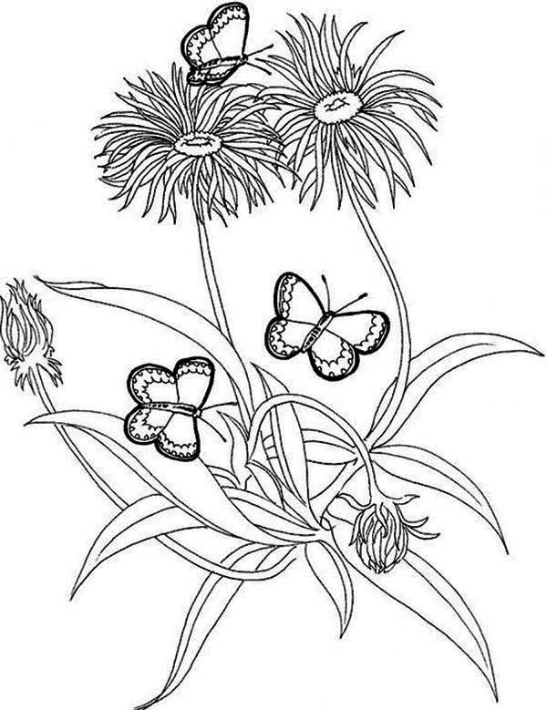 rainforest butterfly and flower coloring page rainforest butterfly and flower coloring page flower coloring pagerainforest