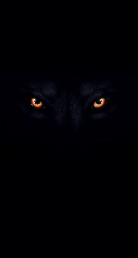 wolf bild mit schwarzem hintergrund