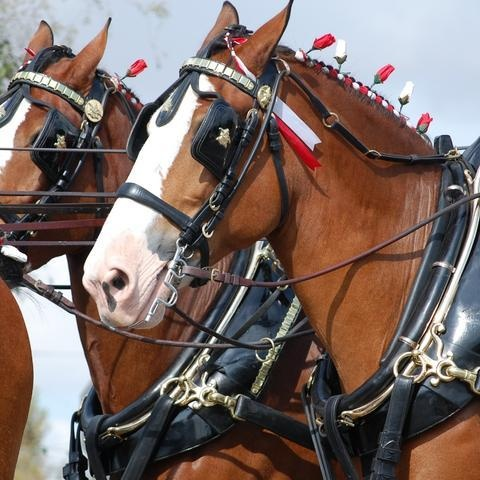 123 best budweiser horses images on pinterest clydesdale horses budweiser departs from its string of light hearted comedic commercials to tug at your aloadofball Choice Image