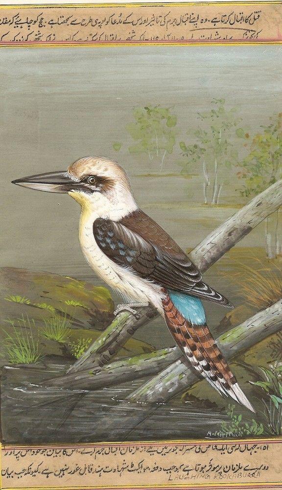Kookaburra Bird Miniature Art