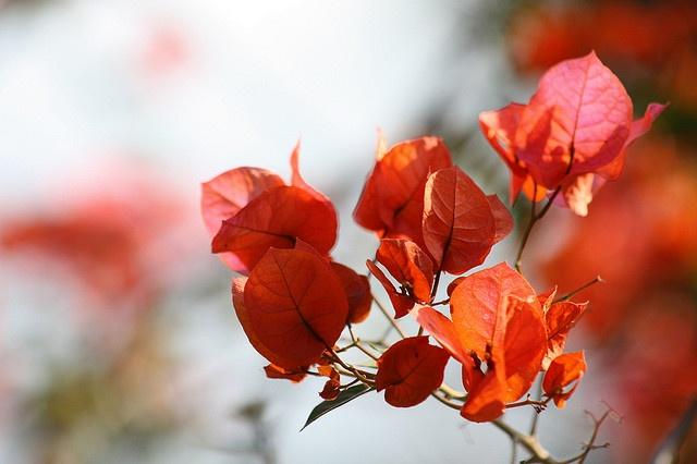 Luang Prabang by AndreZ, via Flickr
