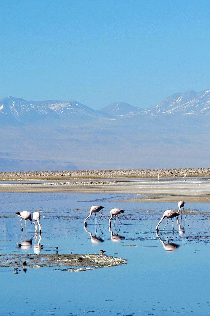 Chile's Atacama Desert, South America: