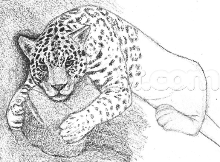 how to draw a jaguar step 9