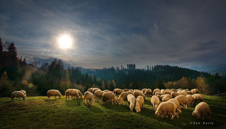 Autumn in Transylvania Romania - landscape