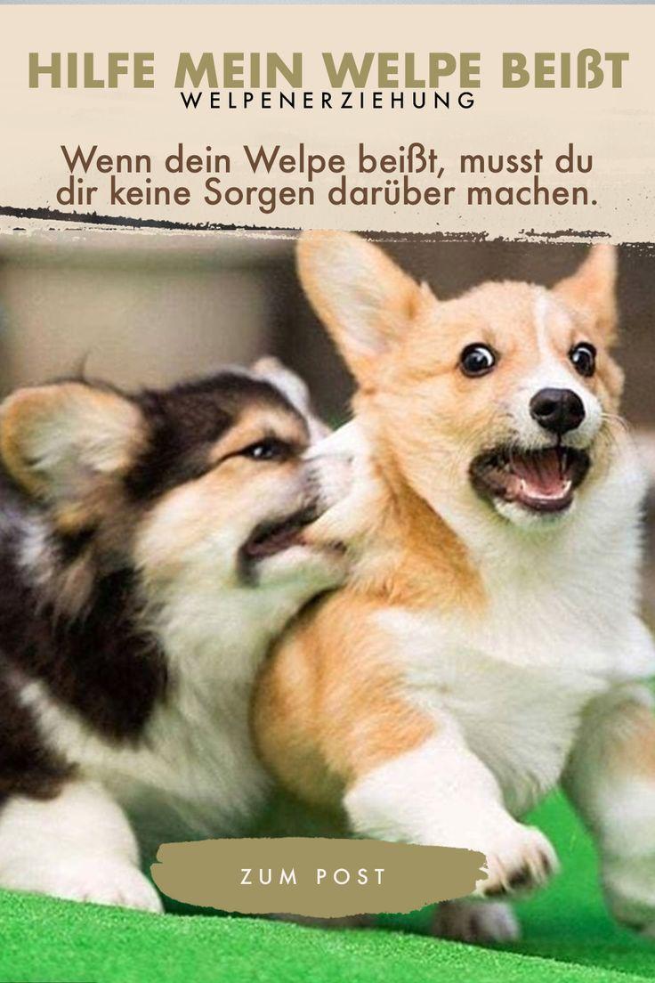 Hilfe Mein Welpe Beisst Hilfe Im Bothshunde Blog Welpen Hunde Erziehen Hunde