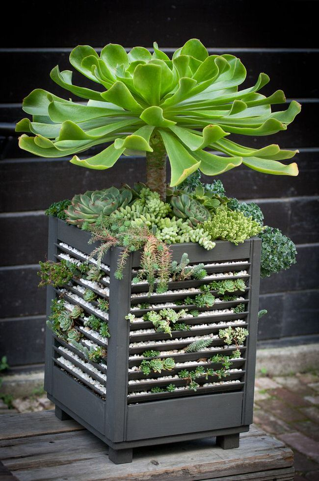 This sedum planter is made from re-purposed from old shutters. The slips of sedums are just tucked into the slats.