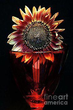 FLOWER for FOODIE #3. by Alexander Vinogradov
