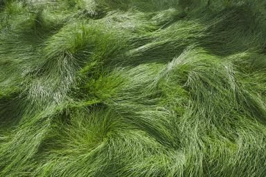 What Type of Shade Grass Is Recommended for the Cool Season and Warm Season?