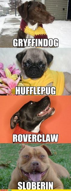 When ever I take Harry potter sorting hat quizzes I am always huffle puff so for the sorting dog houses I would be huffle pug