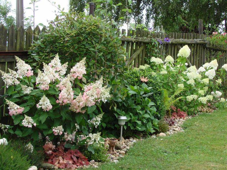 Zleva: Hydrangea Paniculata 'Pinky Winky', 'Limelight' a 'Sundae Fraise'