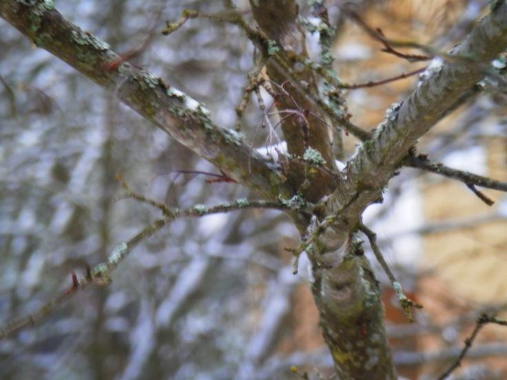 "Jamppa/Finland  ""Winter leaves"""