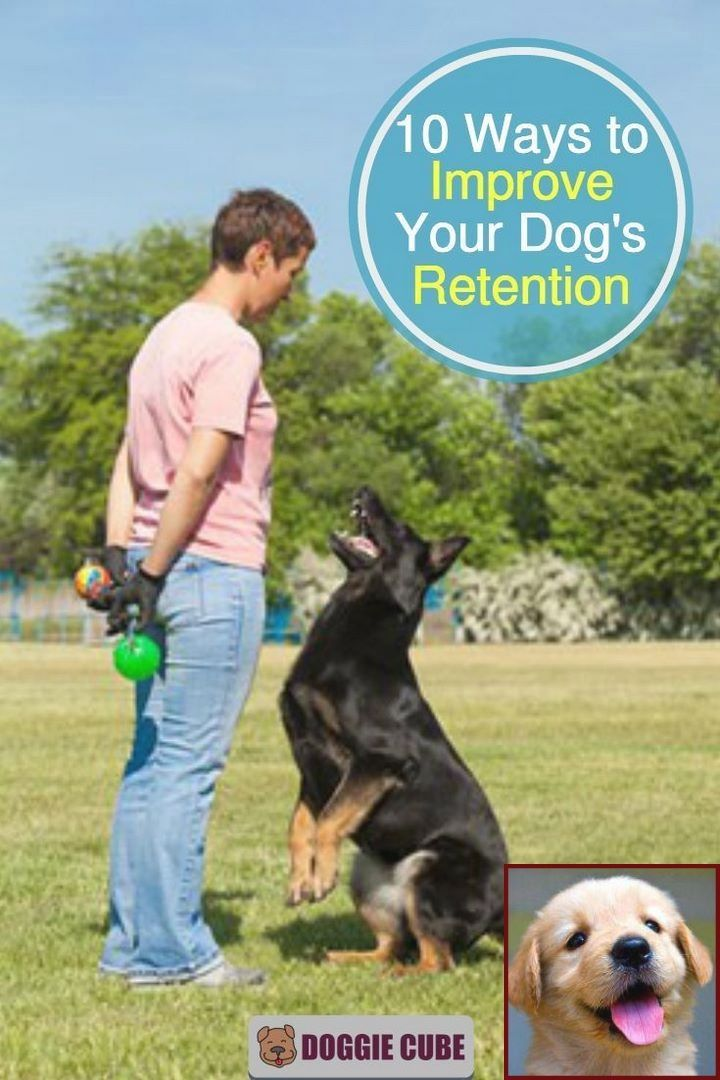 1 Have Dog Behavior Problems Learn About Dog Behavior By Age And