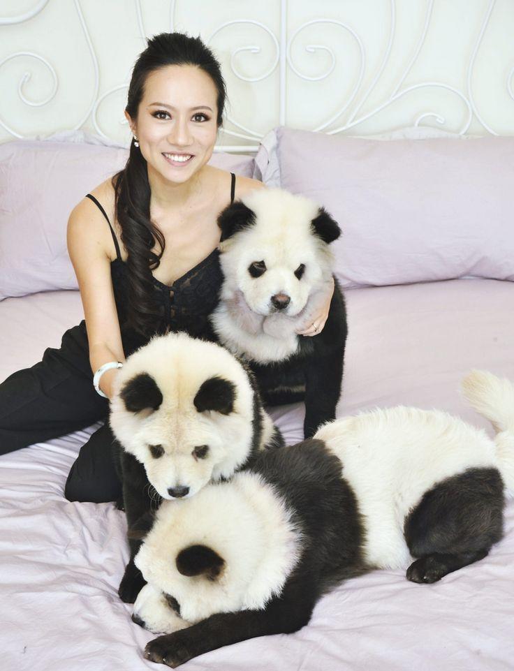 tre pandogs hunde og en kvinde