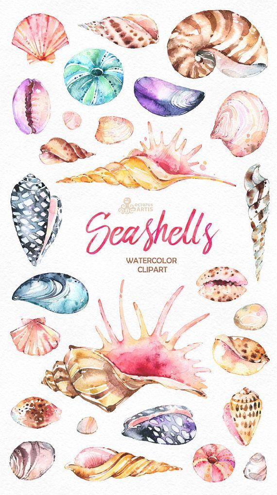 Conchas marinas. 27 acuarela pintada a mano imágenes