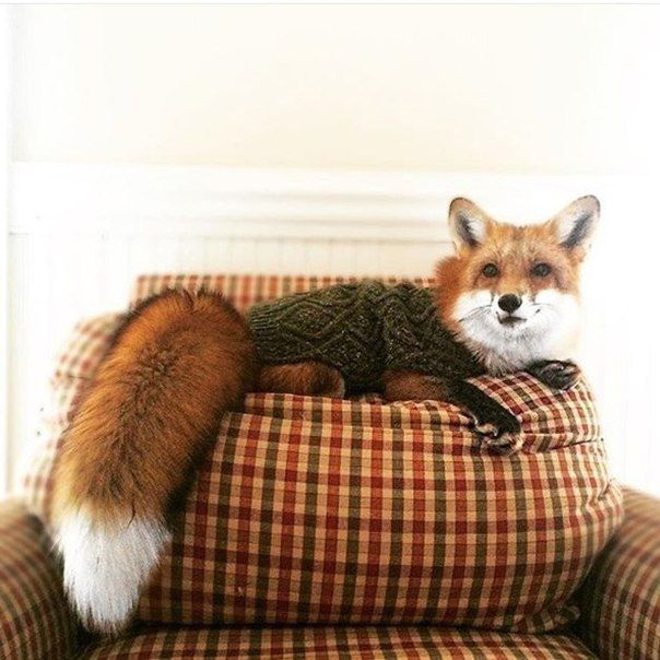This was not what I was expecting when I searched for 'fox sweater' but it's EVEN BETTER