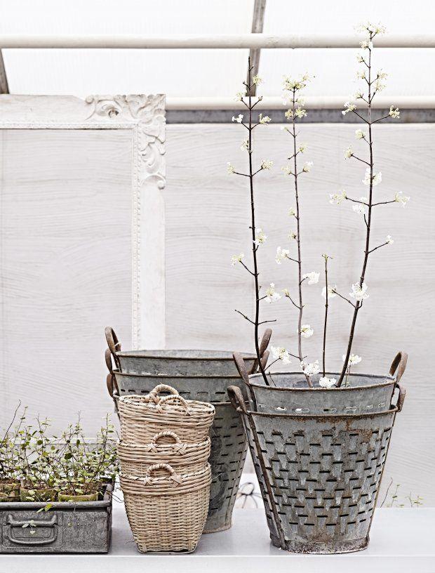 TENK ANNERLEDES: Gamle spann kan bli fine potter! Og putt gjerne et lite tre i bøtta i stedet for småplanter.