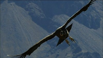 The Condor soars into the valley trough with wings spread wide on a final glide, It's cargo a collective adventurers all European noses press flat the glass, White grey gold piercing beauty descending majestic pride,