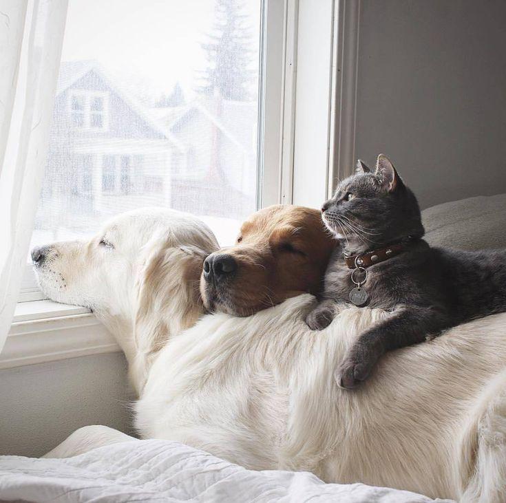 #Cats #Cat #Kittens #Kitten #Kitty #Pets #Pet #Meow #Moe #CuteCats #CuteCat #CuteKittens #CuteKitten #MeowMoe Happy family ... https://www.meowmoe.com/58368/